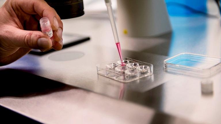 En person jobbar i ett laboratorium.