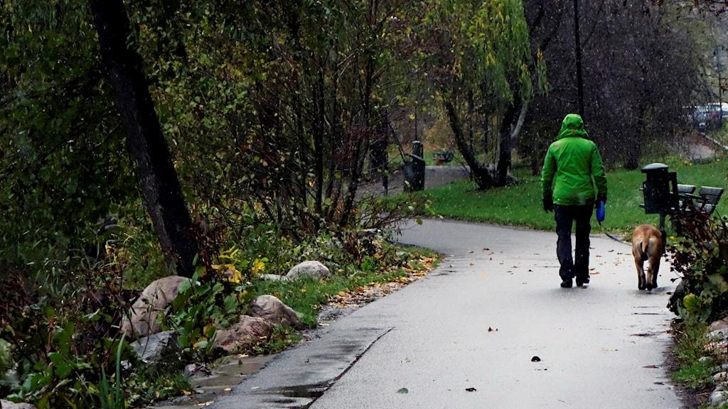 En person är ute på promenad med en hund.