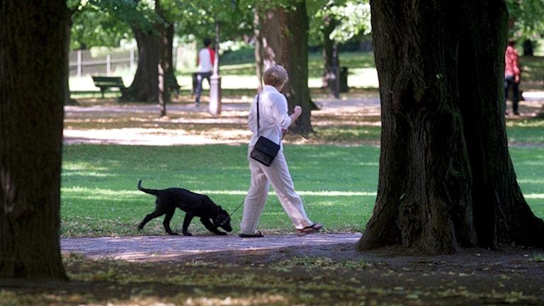 En kvinna ute på promenad med en hund i en park.