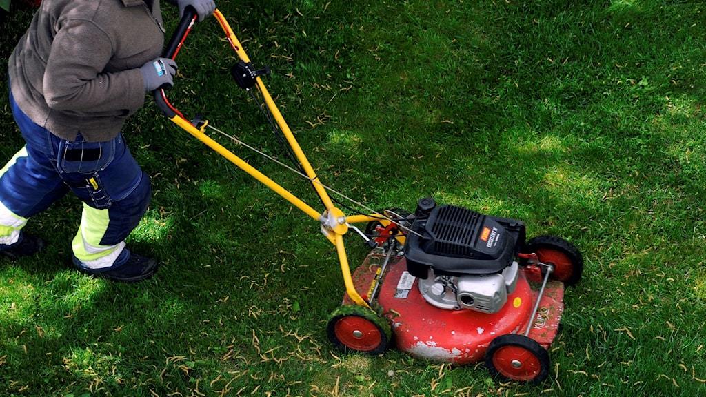 En person klipper gräs.