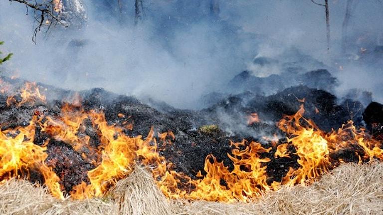 En gräsbrand.