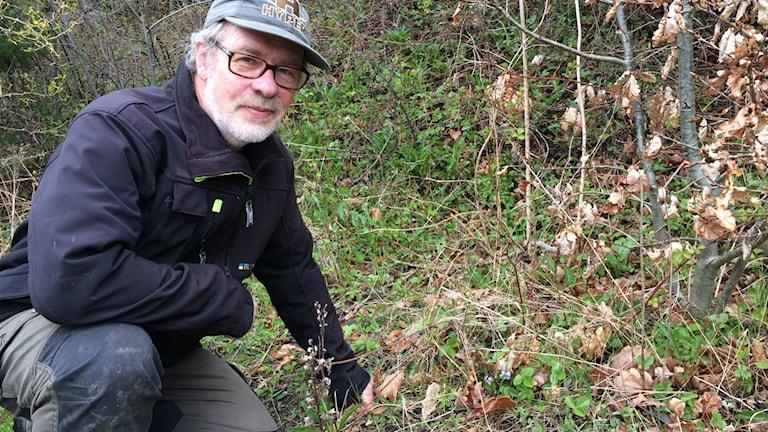 Tore Mattsson vid en blommande blåsippa på södra Orust