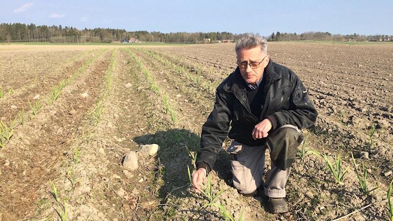 Michael Rokvist i Trollhättan är en av fem i regionen som provar andelsjordbruk i år.