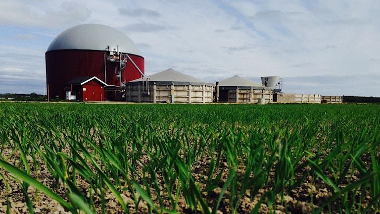 Brålanda biogas kommer tappa upp till 30 procent av sin biogasproduktion när de i sommar inte får ta emot slaktavfall från Dahlberg Slakteri.