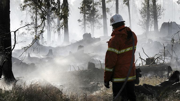 En brandman står vid en släckt skogsbrand.