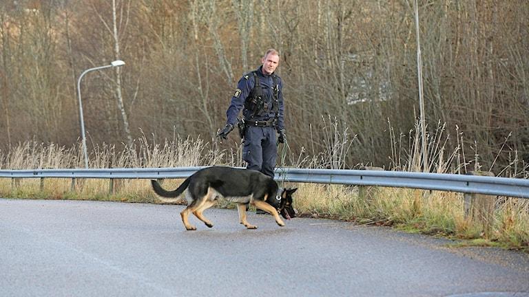 En polis och hans polishund jobbar i vägrenen.