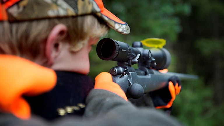 En närbild på jägare som siktar med sitt gevär. Foto: Jessica Gow/TT.