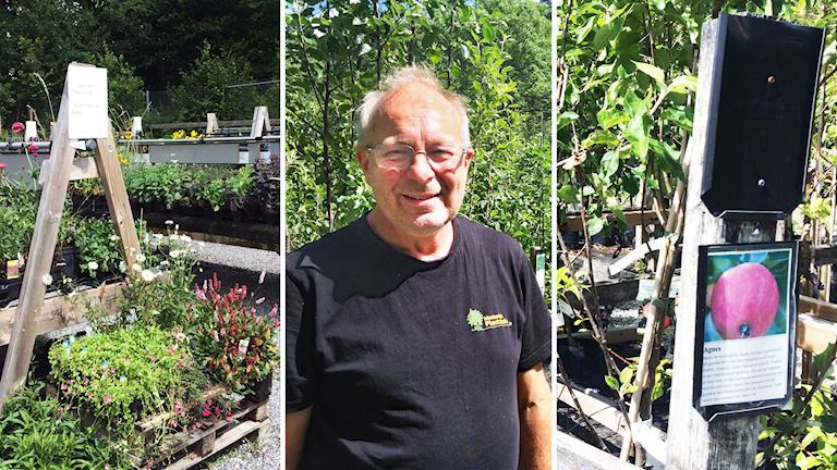 Alf Jantén, driver Munekdals plantskola