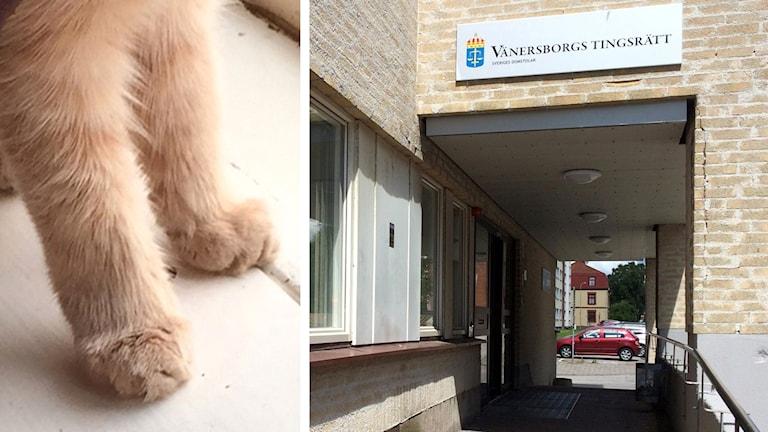 Montage av katt-tassar och Vänersborgs tingsrätt.