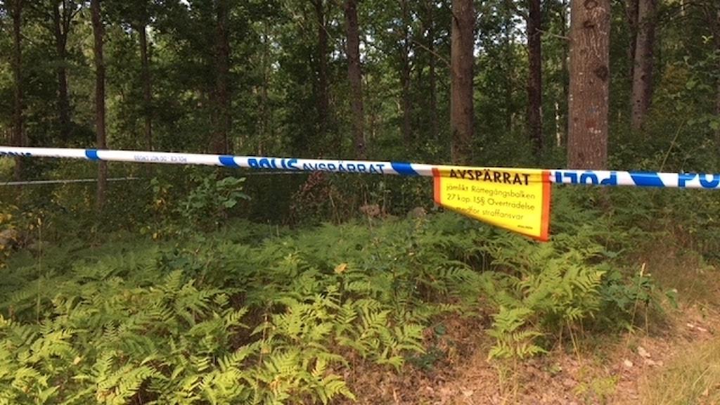 Avspärningsband från polisen i skogsområdet.