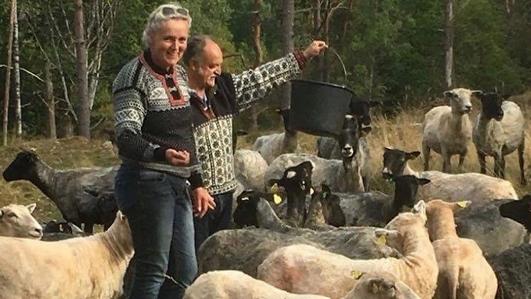 får, David Naraine, Mellerud