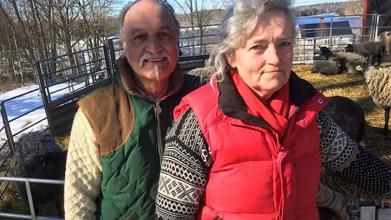 David och Marie Naraine driver en gård i Dalsland som producerar lammkött. Här står dom utanför fårhagen.