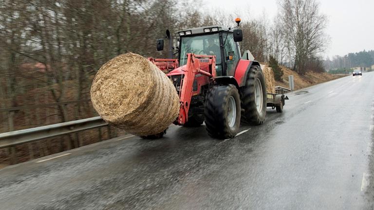En traktor transporterar ensilage på en väg.