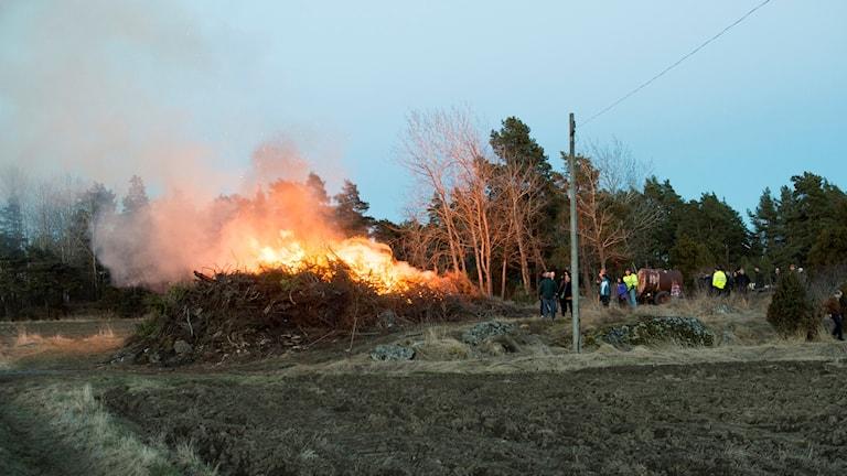 Traditionell brasa eldas på landet.