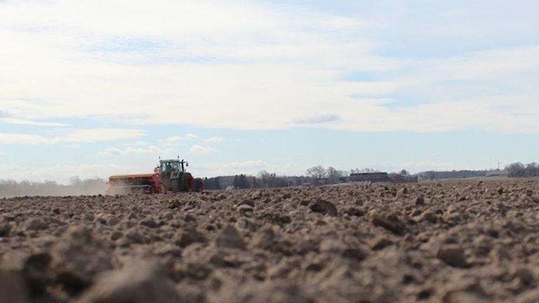 Korn, havre, ärtor och åkerbönor är ett axplock av vad som sås under vårbruket.