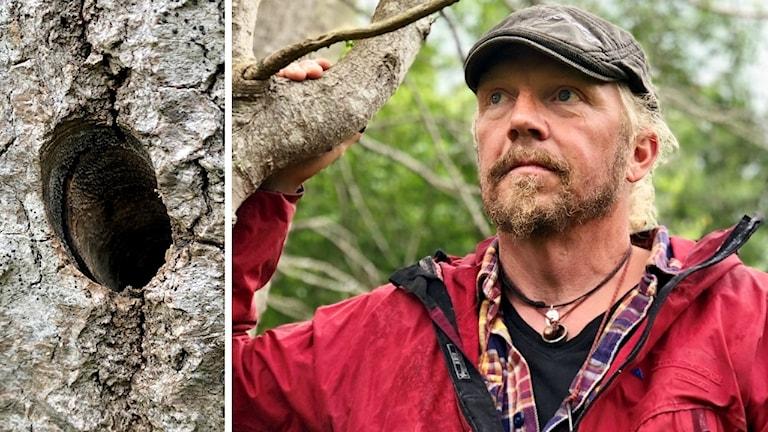 Bo Säll i skogsmiljö. Han poserar framför det döda trädet. Till vänster om honom syns det borrade hålet.