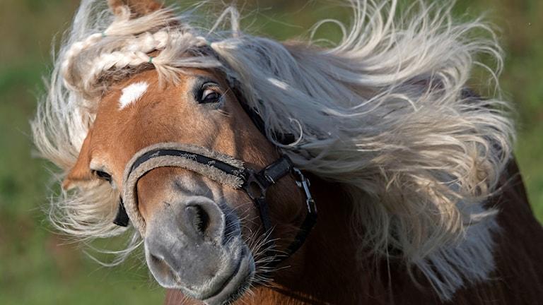 En häst