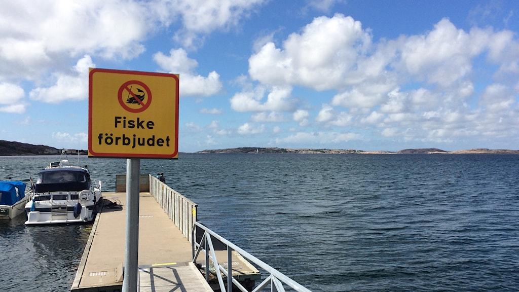 Fiske förbjudet-skylt i Lysekils norra hamn. Foto: Jens Wingren