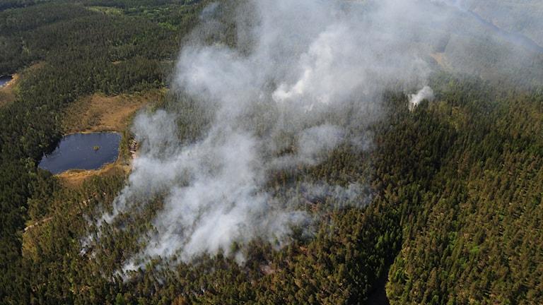 Stort skogsområde som ryker kraftigt, sett från luften.
