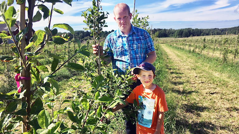 Äppelodlaren Martin Persson och sonen Edvin i äppelodling.