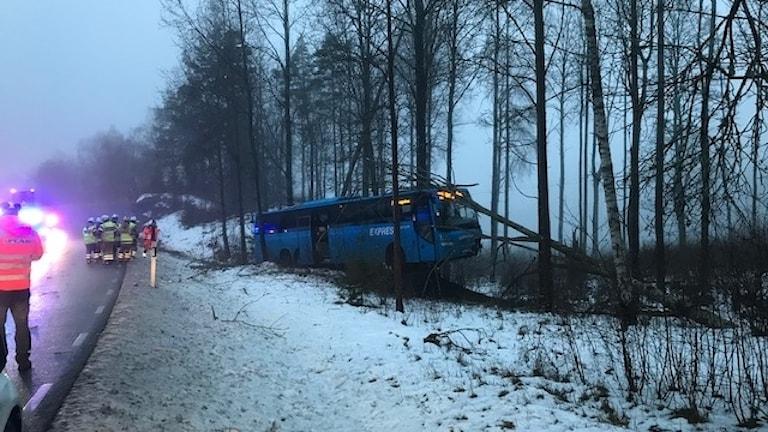 Buss vid träd