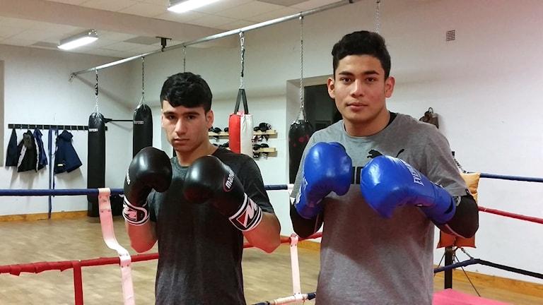 Ezatolla Oria och Taher Ibrahimzad, Vänersborgs Boxningsklubb