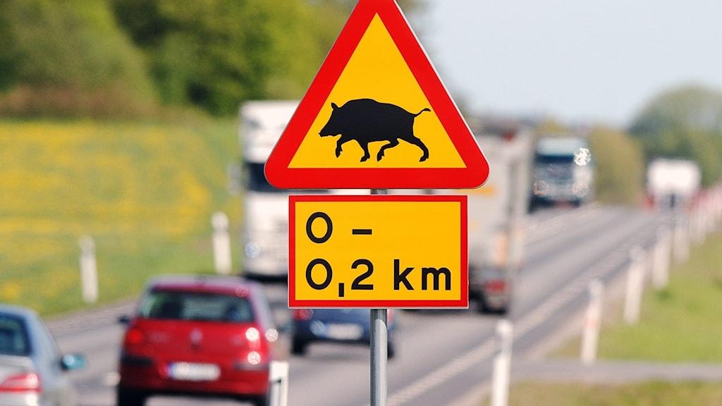 Bild på trafikmärke - varning för vildsvin.