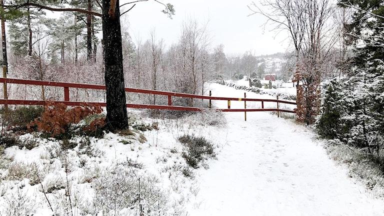 Ett rött staket står över ett snötäckt motionsspår genom en skog.