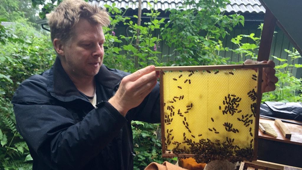 Roger Magnusson biodlare och bitillsynsman med sina bin. Foto: Elisabeth Cederblad/Sveriges Radio.
