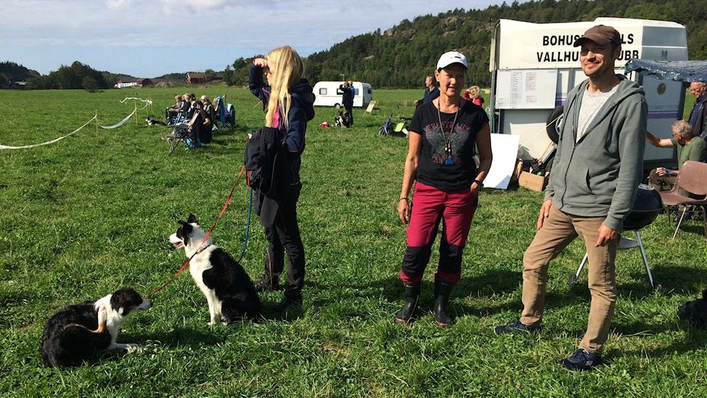 hundar och människor på gräsplan
