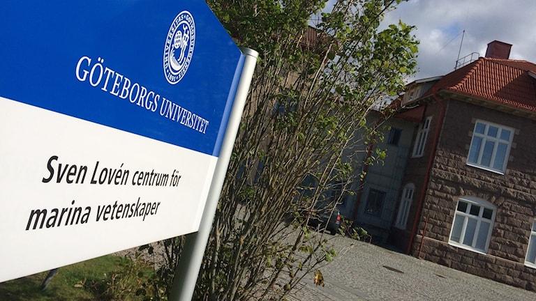 Sven Lovén centrum för marina vetenskaper Kristineberg