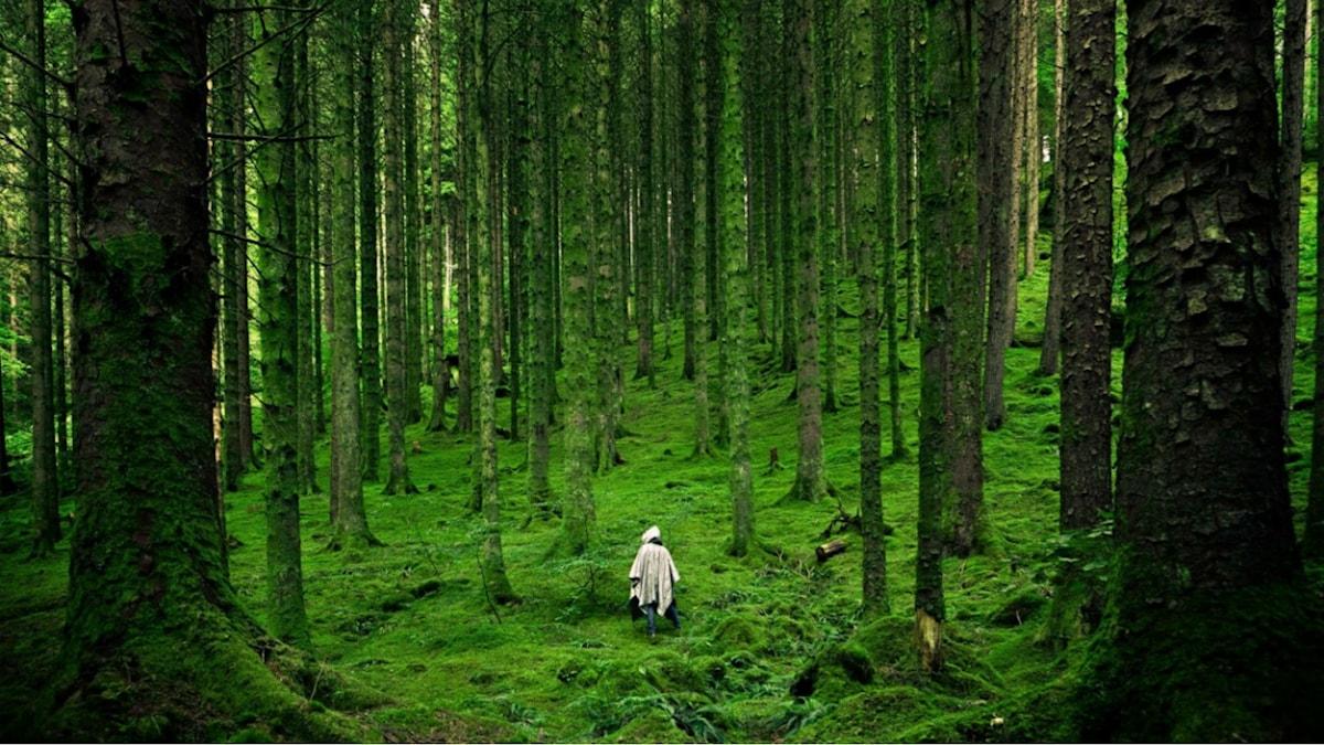 Människa i skog