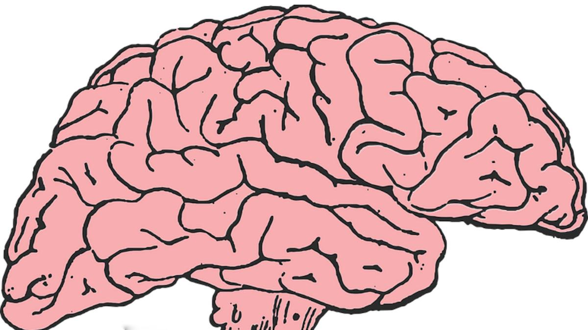 Rosa tecknad hjärna