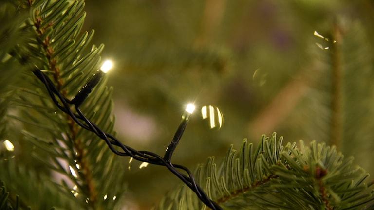 Närbild på julgran med ljusslinga