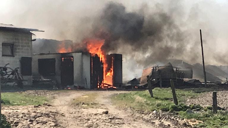 Brand i ladugård i Särdal.