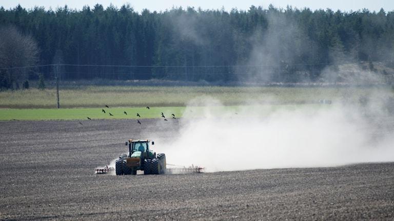 Glyfosat är ett vanligt inslag i det svenska jordbruket. Inte minst som en beståndsdel i bekämpningsmedlet roundup.