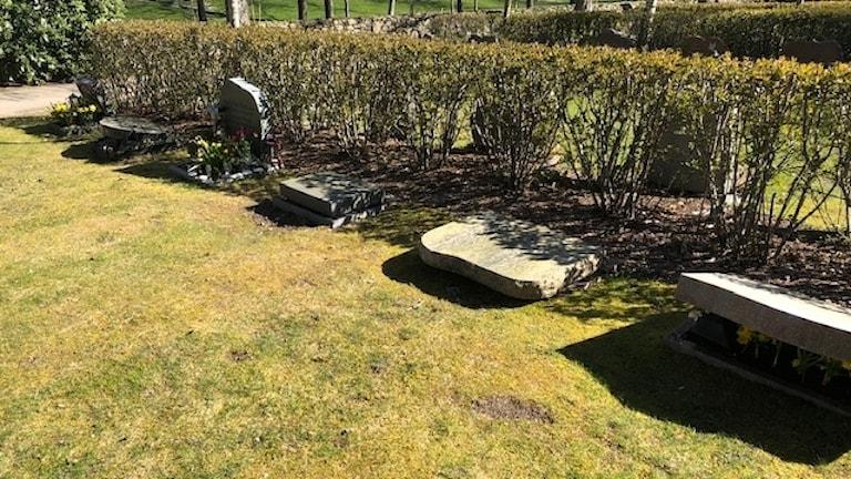 25 gravar skändade i Kungsbacka.