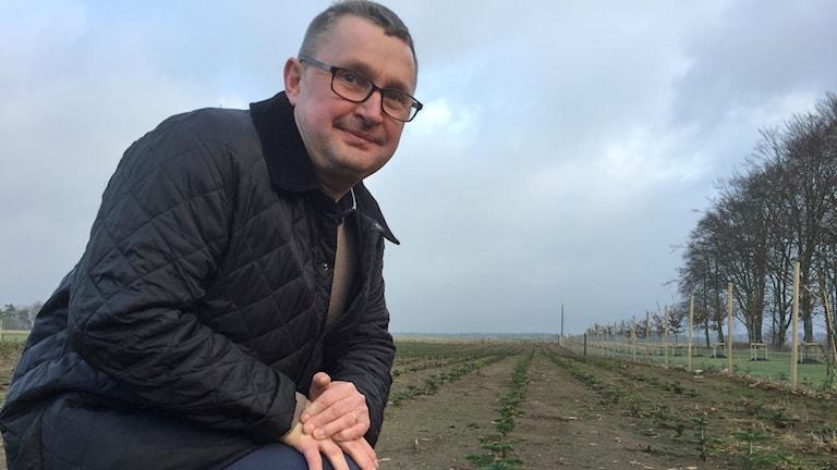 Claes Hamilton i ett av granfälten som sattes i våras.