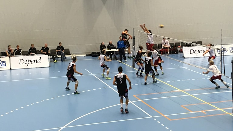 Hylte/Halmstads herrar spelar volleyboll.