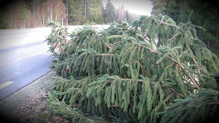 Träd föll i stormen