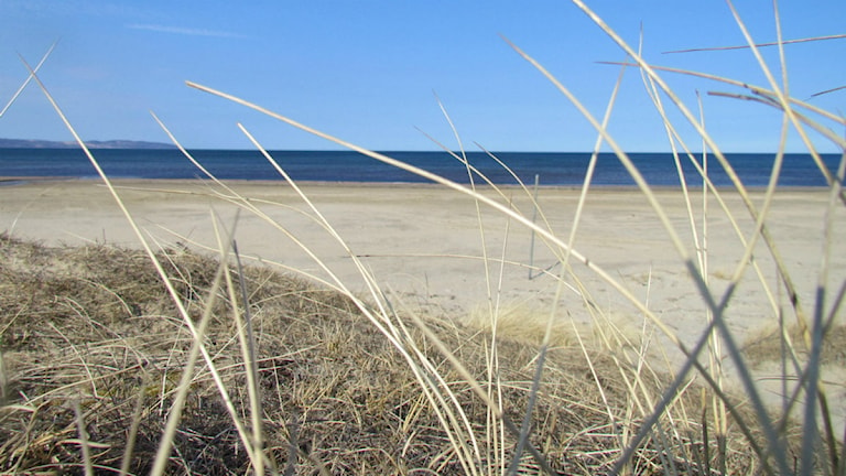 "Laholms kommun backar om ""vuxendel"" på stranden i Mellbystrand."