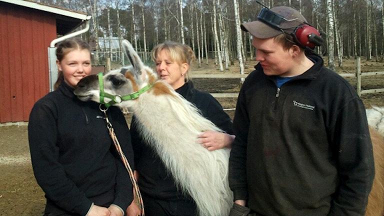 Laman Linnea på Munkagårdsgymnasiet, tillsammans med Ellen Torstensson, Maria Löfven och Johan Henriksson.