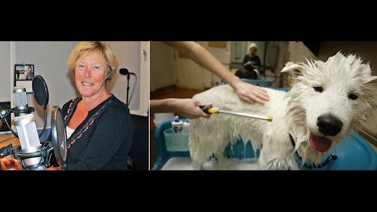 Ingrid Hammarlind svarar på frågor om hundar. Foto: Sveriges Radio/TT