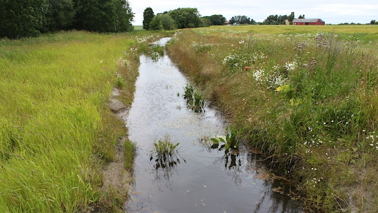Halländsk pilotanläggning för andra generationens våtmarker. Foto: Hushållningssällskapet