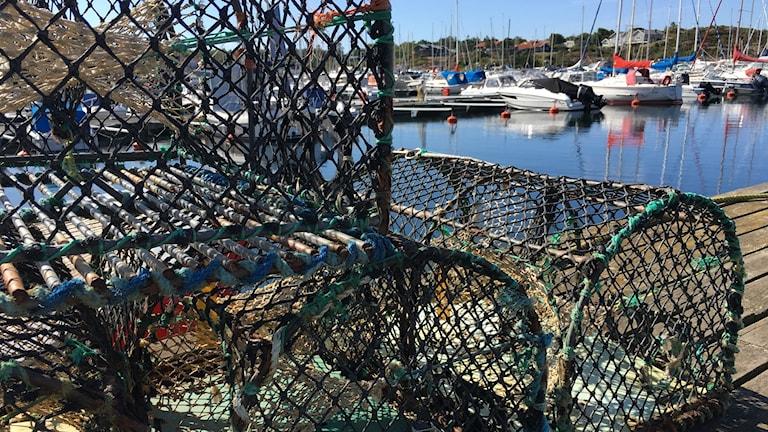 Tinor hav fiske hummer kräftor fiska fiskebåt hamn spökgarn havsskräp