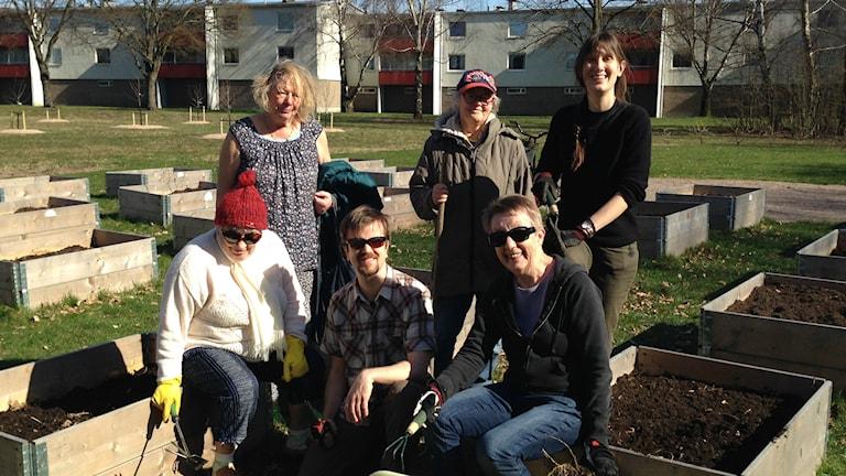 En gång i veckan träffas medlemmarna i Linehedsodlarna för att sköta om det som växer i pallkragarna i Linehedsparken i Halmstad. Foto: Therése Alhult/Sveriges Radio