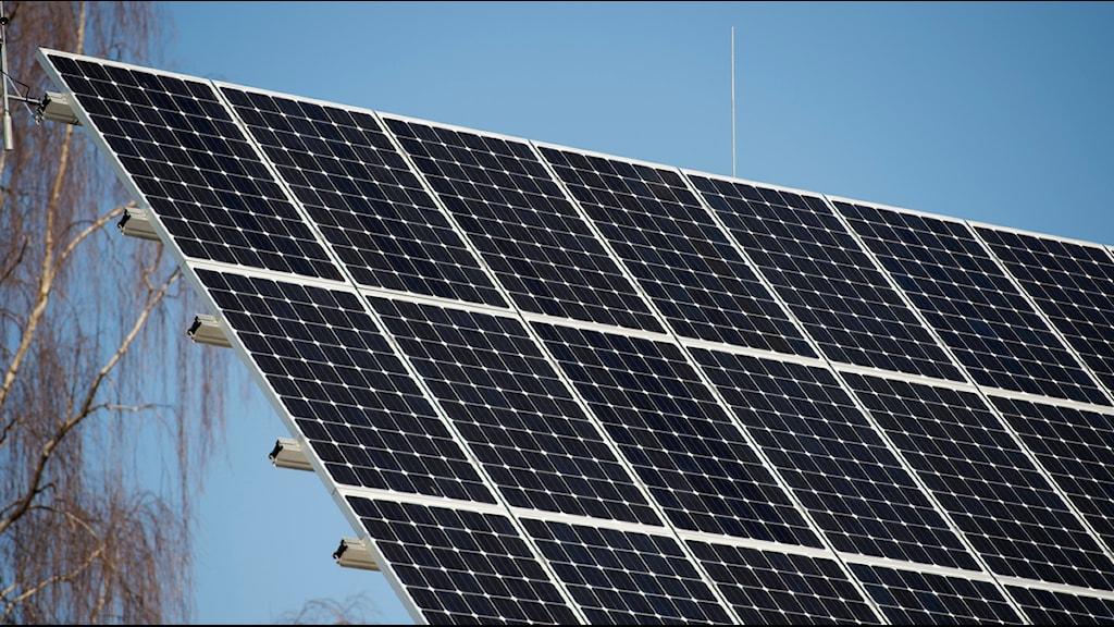 Antalet solceller ökar snabbt i Halland. Foto:FREDRIK SANDBERG / TT