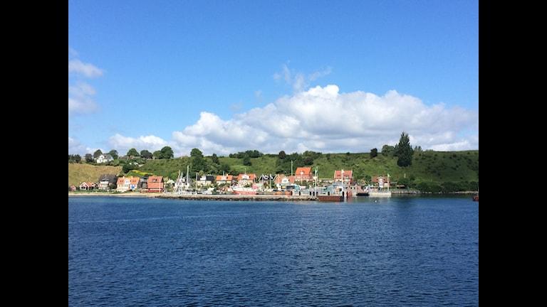 Björkviken på Ven. Foto Ann Jornéus Sveriges Radio