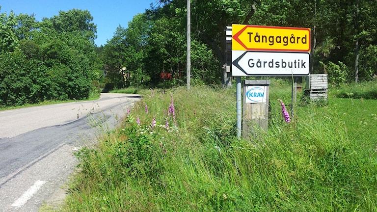 Vägskylt till Tångagård. Foto: Therese Wahlgren/Sveriges Radio.