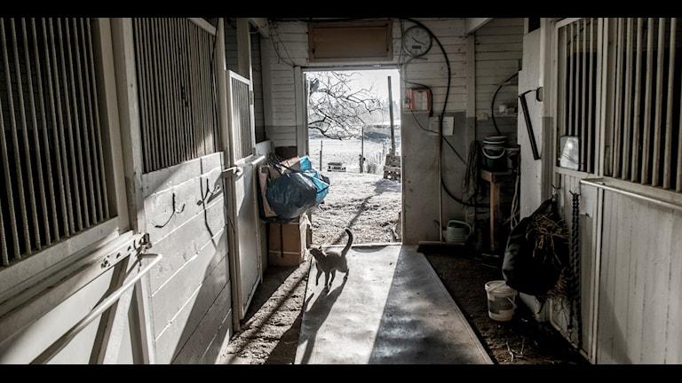 Flera stall i Västsverige har drabbats av sadelstölder. Bilden är inte tagen hos de drabbade. Foto: Magnus Hjalmarson Neideman/TT.